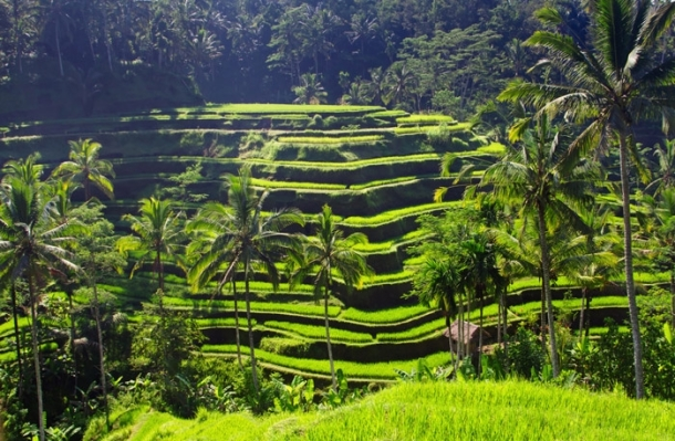 Feel the nature in Bali