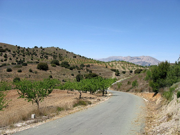 Andalusian countryside road