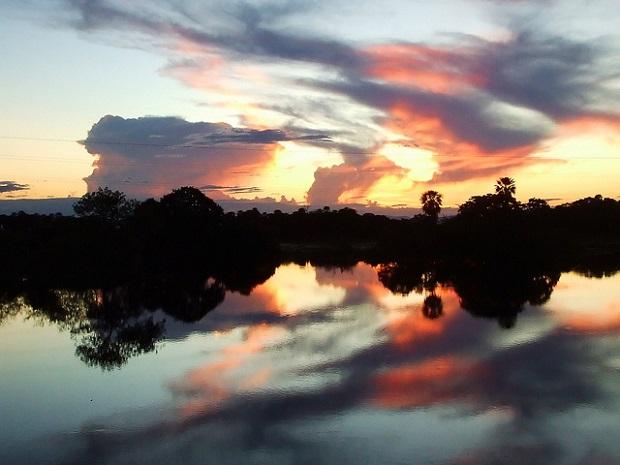 Pantanal Beauty