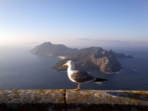 Cies Islands and the all seeing seagull