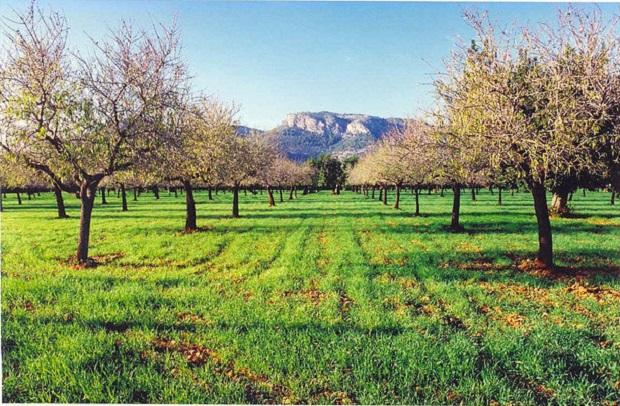Majorca Green Field