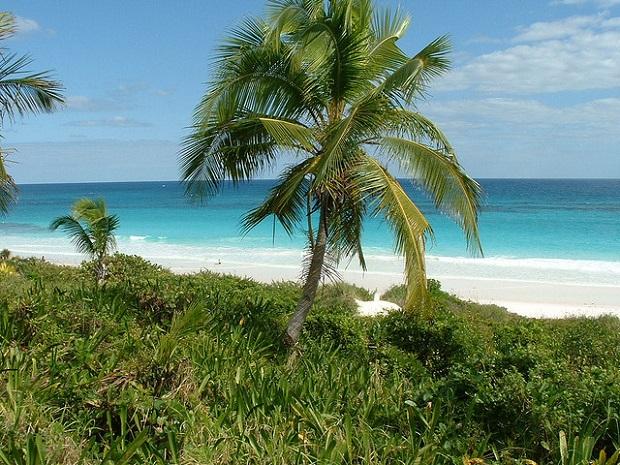 Pink Sand Beach Dense Nature