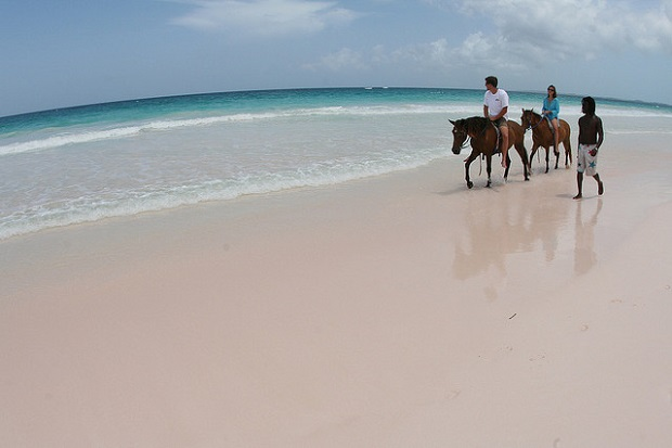 Pink Sand Beach Horseback riding
