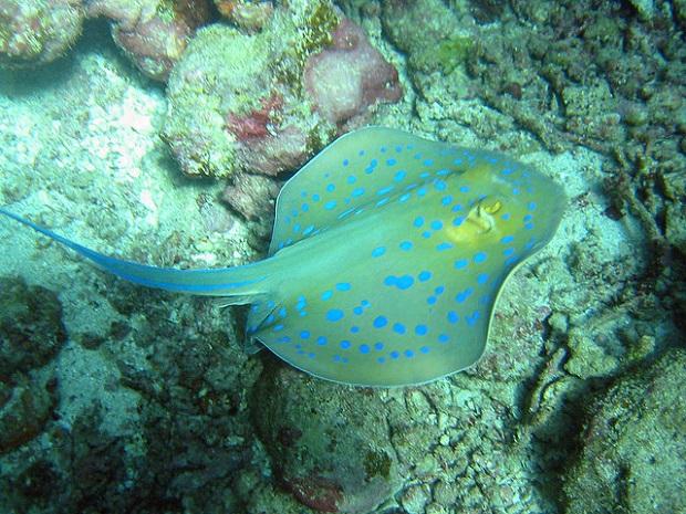 Ibiza Underwater Life
