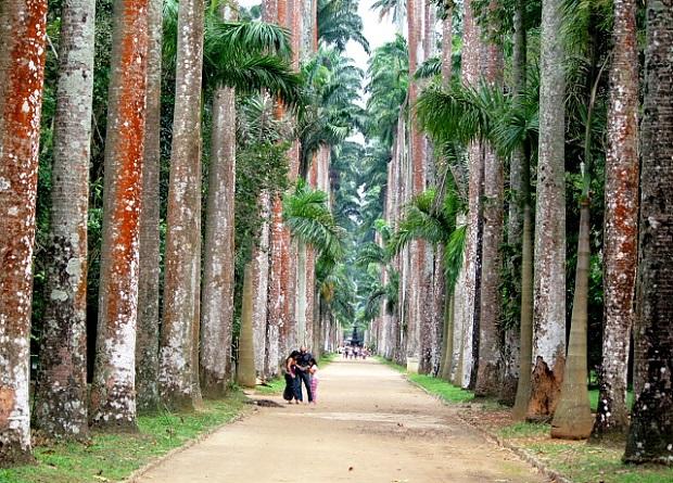 Rio de Janeiro Botanical Gardens