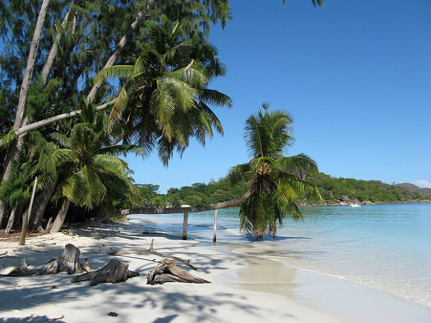 Seychelles Trees leaning towards the sea