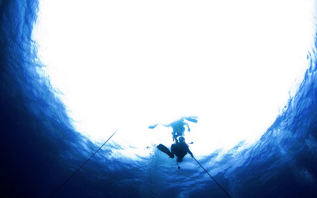 Red Sea Diving underwater