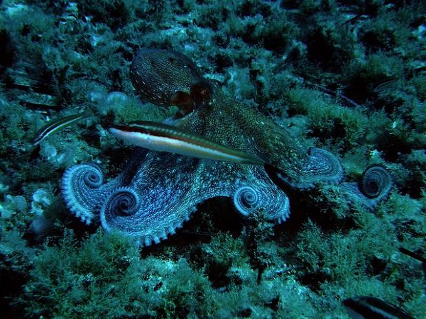 Formentera diving