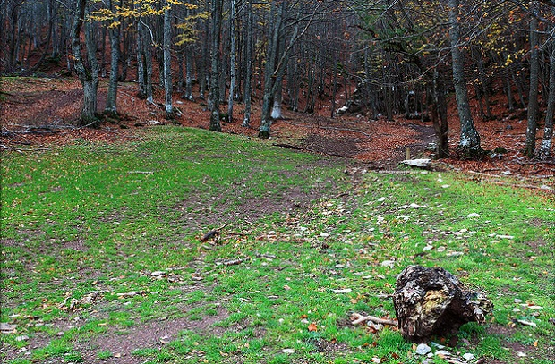 Tejeda woods