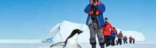 Antarctic, Penguin