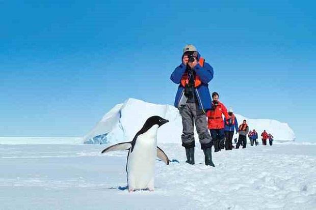 Antarctic, Penguin